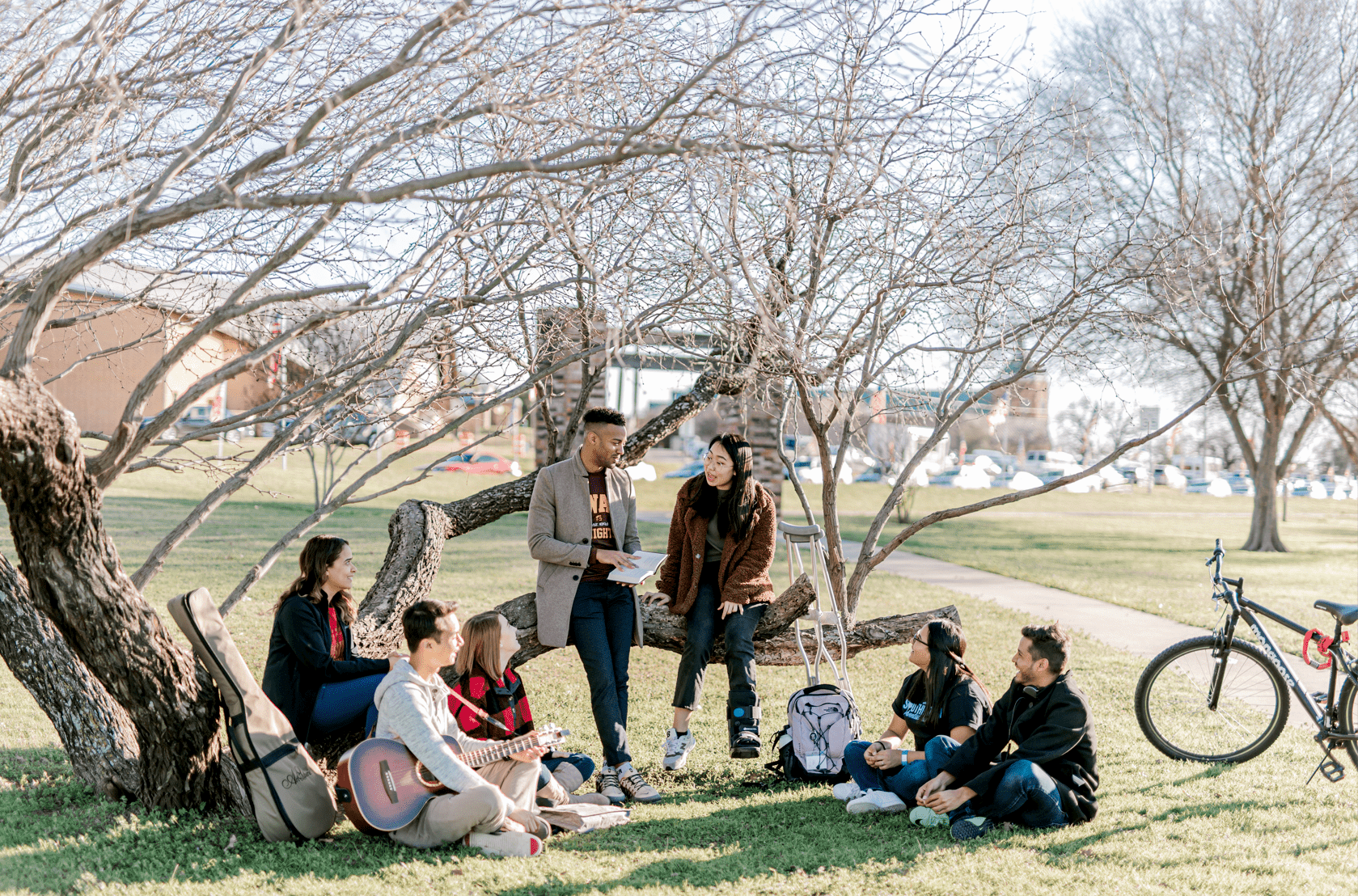 A group of students hang out and sit on and below a low tree